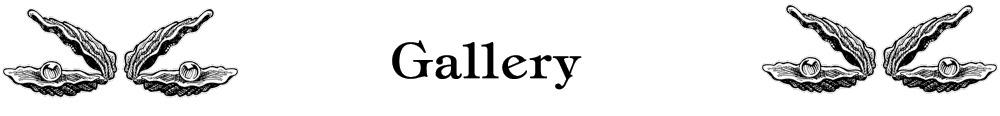 page-header3_gallery